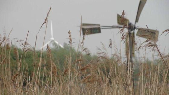 Natuur en windenergie_De Windvogel